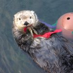 7 Things You Didn't Know About Sea Otters