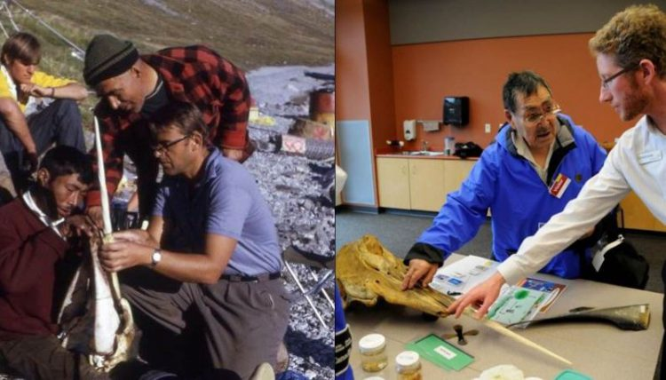 Left: In 1972, the Aquarium was gifted with a narwhal skull by members of the Pond Inlet community. That same skull continues to be used at the Aquarium today (right). In this photo, an elder from the same community shares his knowledge of the Arctic whale with our staff.
