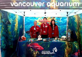 Volunteers at the Vancouver Aquarium