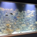 A Growing Coral Garden at the Aquarium