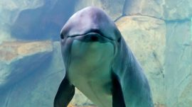 Harbour Porpoise Lecture Event at Vancouver Aquarium