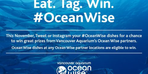 Ocean Wise Instagram Contest