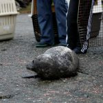 A Life Changing Moment for Seal Pup and Donor