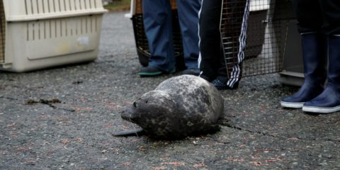 Seal Release