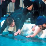 Chester, the False Killer Whale, Grows into Larger Habitat