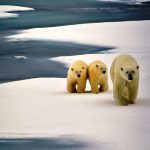 Frozen Moments: Images from the Arctic