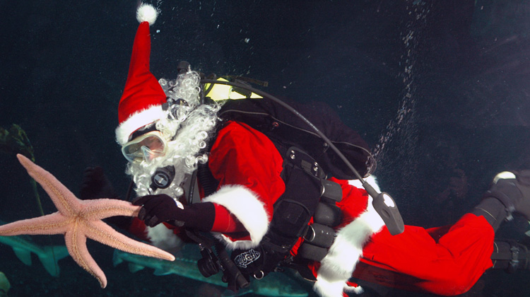 Scuba Claus at the Vancouver Aquarium.