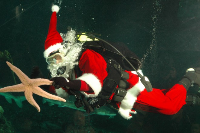 Scuba Claus at the Vancouver Aquarium