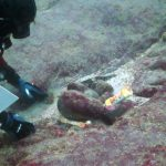 iButton Toiling Away at Ocean Bottom