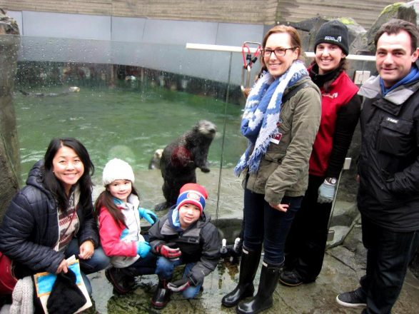 Wally the sea otter recieves ongoign care at the Vancouver Aquarium