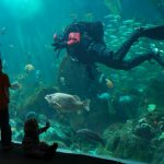 Under the Sea: Dive Stats for 2014