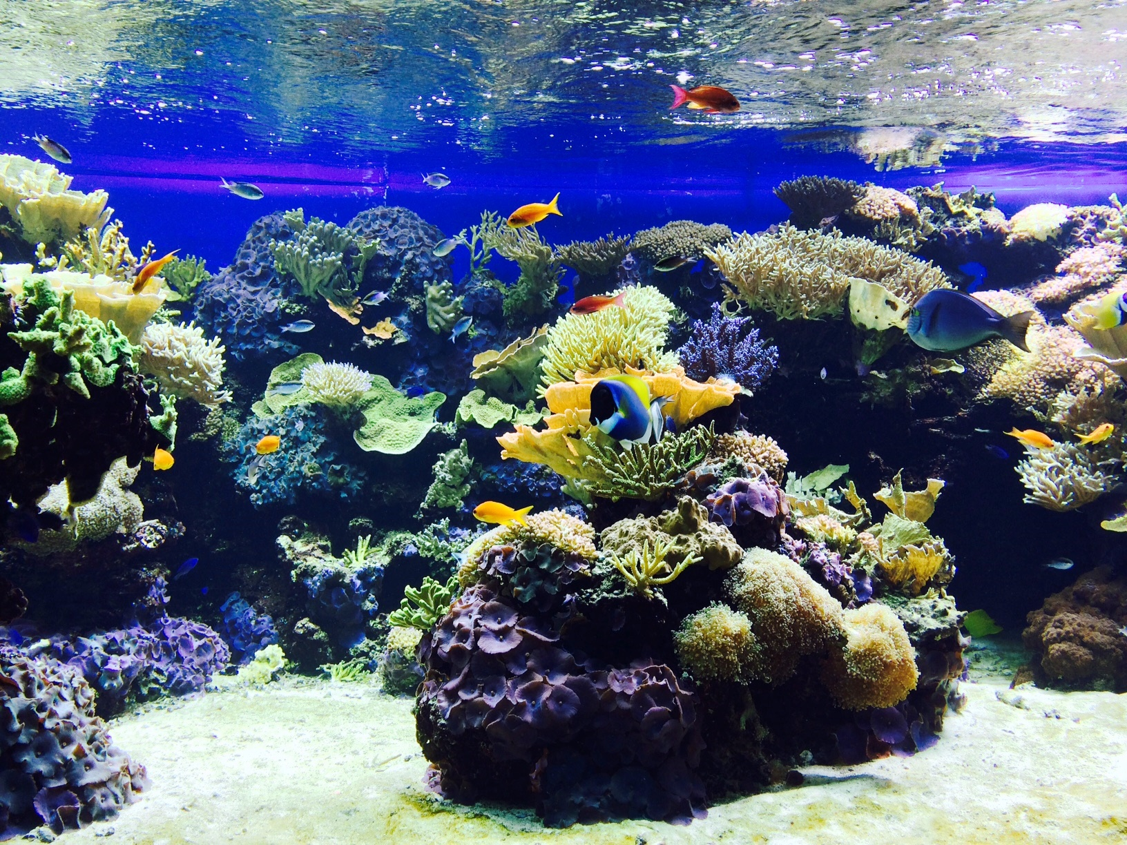 how to cycle an aquarium without fish