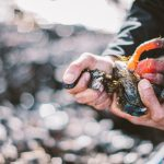 On Sustainability, Gooseneck Barnacles and Mickey Mouse