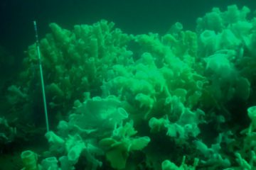 Glass sponge reef diving in B.C.