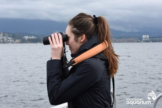 Killer whale research at the Vancouver Aquarium