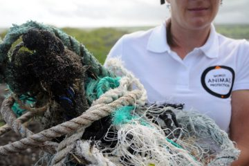 Ghost Gear Removal with Vancouver Aquarium