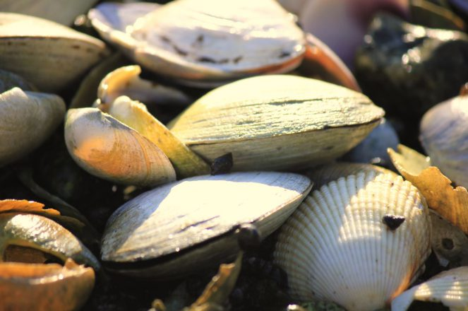 Ocean Wise farmed Shellfish