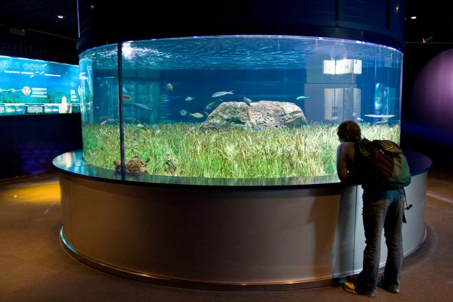 Vancouver Aquarium manages Europe's largest aquarium
