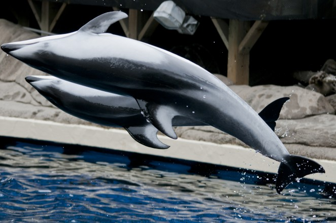 Hana and Helen, rescued dolphins