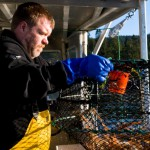 Keeping Spot Prawns Sustainable