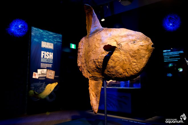 Vancouver Aquarium sea monsters revealed