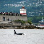 Report Your Cetacean Sightings with Our New App