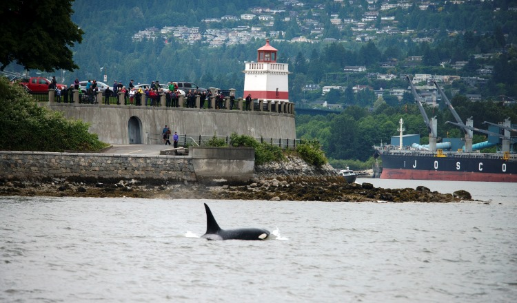 Vancouver Aquarium launches whale sightings app