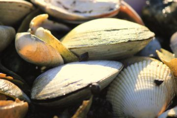 Sustainable seafood shellfish
