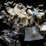 Research Reveals Microplastics Entering the Food Web