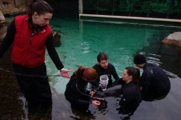 Cetacean research at Vancouver Aquarium