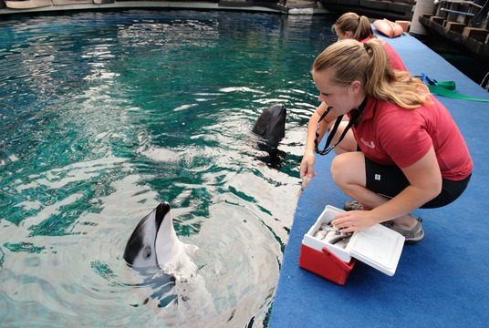 Rescued cetaceans at Vancouver Aquarium