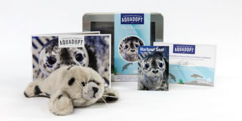 Vancouver Aquarium Harbour Seal AquaAdopt Kits