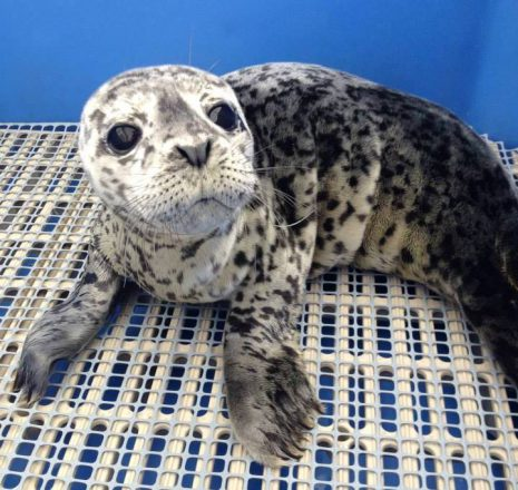 Seal pup rescue centre