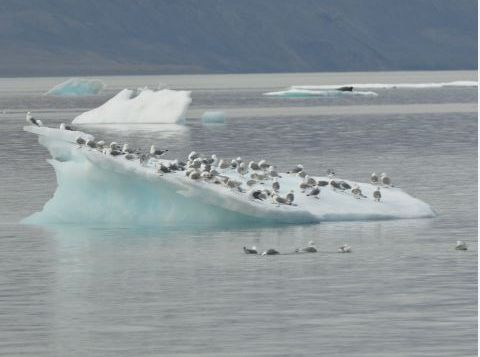 Seabirds dot an iceberg in the fiord.