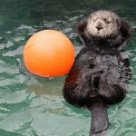 Vancouver Aquarium Summer 2015 in Numbers