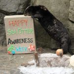 A Sensible Article on Sea Otter Senses