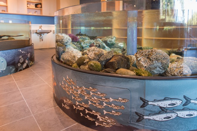 Students can see hermit crabs, juvenile rock fish and purple sea urchins in the rocky outcropping exhibit.