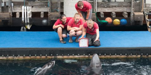 Rescued false killer whale