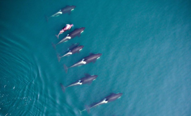 Photogrammetry allows researchers to measure whales from above.