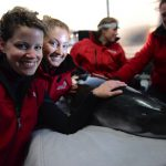 Porpoise Program Wins Award