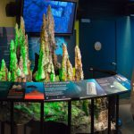 Life in the Deep: Hydrothermal Vents
