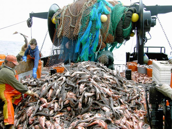 Overfishing occurs when more fish are being taken from a population than it is producing naturally.