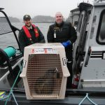 Rescued Seal Becomes Special Cargo