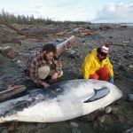 Rare Risso's Dolphin Provides Learning Opportunity