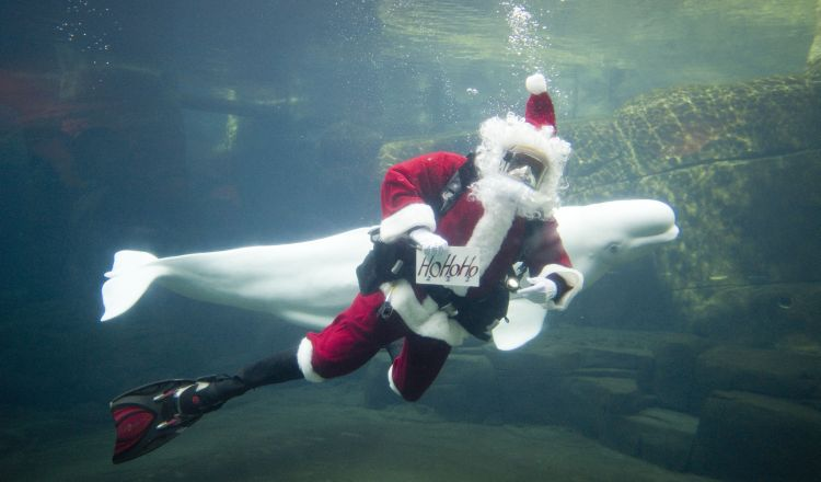 Scuba Claus operations fall under the supervision of the Aquarium's diving safety officer.