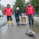 One Seal Pup's Happy Ending Highlights Dangers of Marine Debris