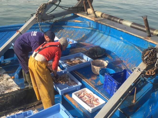 Local fishermen carefully collect the turtle to begin the journey to Oceanografic for assessment and recovery.