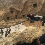 On Assignment: Road trip — with Penguins!