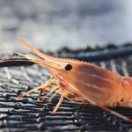 Shrimp Series Part One: British Columbia's Spot Prawn Fishery