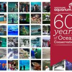Celebrating 60 Years Of Ocean Conservation